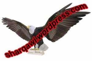 eagle paper model